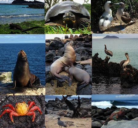 imagenes animales galapagos las islas gal 225 pagos los animales de gal 193 pagos