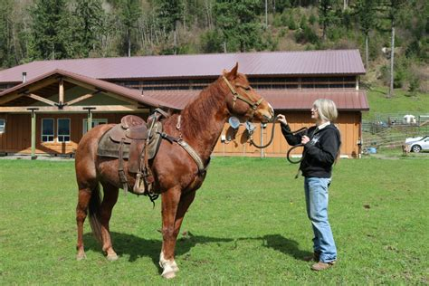 the perfect horse the jerde is living her dream after building the perfect horse stable lewistalkwa