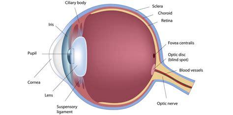 eye anatomy diagram eye anatomy sclera human anatomy diagram