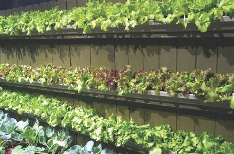 Vertical Garden Lettuce No Space Grow Up Tips For Vertical Gardening Hoosier