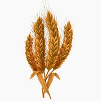 problems with whole grains learn about paleo