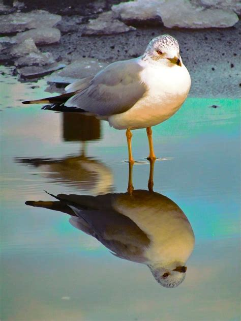 backyard bird watch 94 best images about long island beaches on pinterest