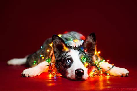 christmas themed names dogs photographer captures adorable christmas themed dog