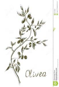 olive branch painting hand drawn royalty free stock photography image 36194587