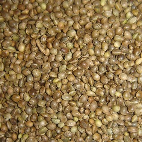 hemp seeds good for birds wroc awski informator