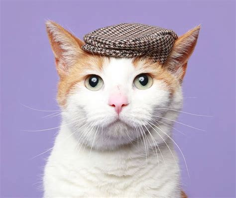 images cats 1000 images about cats with hats on the