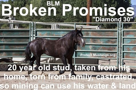 blm nevada protect mustangs