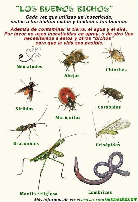 How To Find Ladybugs In Your Backyard Los Buenos Bichos Ecocosas