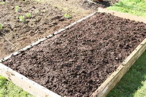 Steer Manure In Vegetable Garden Mar162 2 On 19th Top Layer Cow Manure Spread And Trodden