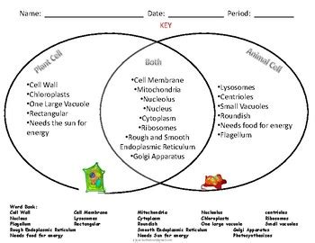 venn diagram animal and plant cells venn diagram of a cell image collections how to guide