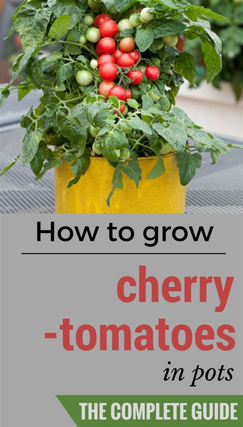 17 best ideas about growing cherry tomatoes on pinterest grilled tomatoes cherry tomato
