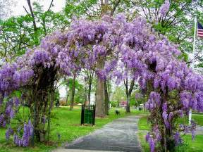 tell me a story wisteria