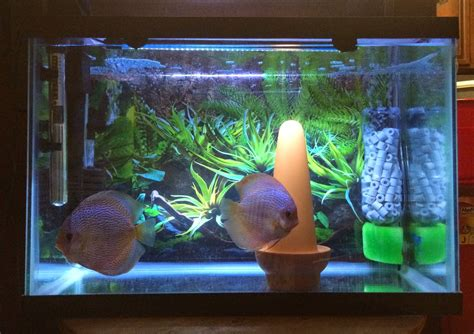 aquarium diy projects kaylen s discus diy aquarium filter