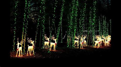 riverbanks zoo lights before riverbanks zoo lights before cards