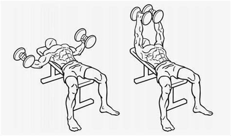 flat bench dumbell flyes fittness tips 08 22 14