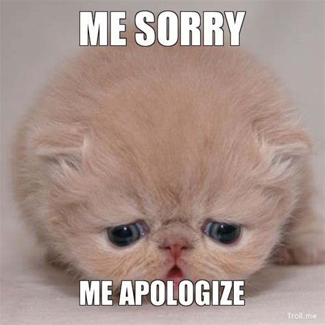 Apology Meme - i m sorry the cat cafe