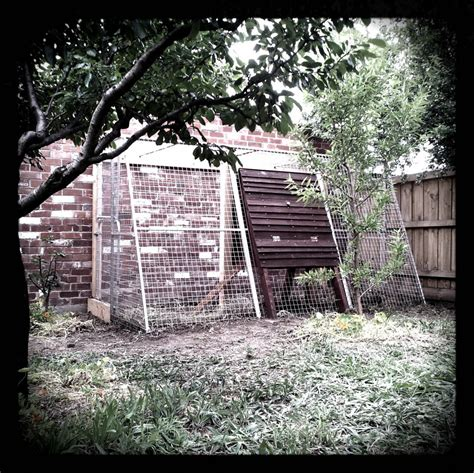Backyard Chickens Melbourne Luxurious Fox Proofed Chicken Coop Thornbury The Union Of Ornamental And Productive