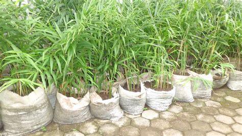 Polybag Ukuran 40 X 50 menanam jahe merah di polybag pot ncca19