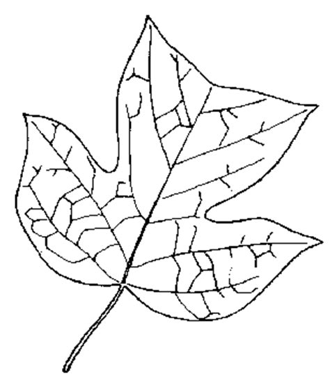 tulip leaf coloring page for 2 yellow poplar