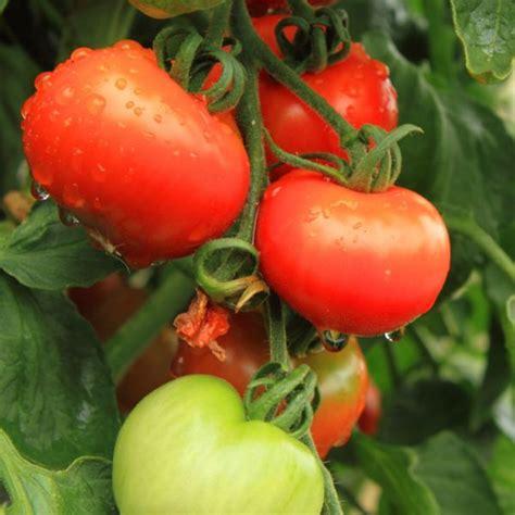 b q fruit plants plants trees seeds bulbs gardening