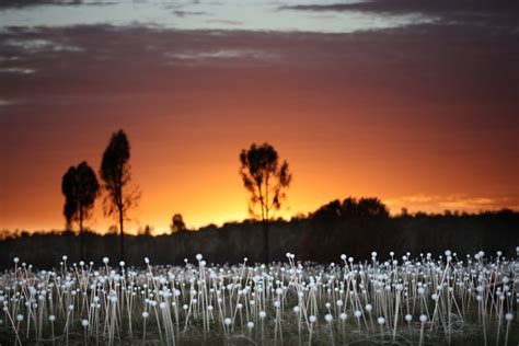 Field Of Light by This Field Of Light Grows In The Australian Desert Pbs
