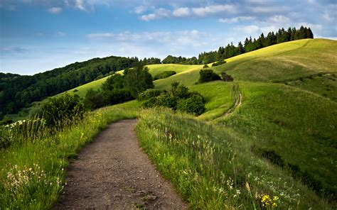 path green fields wallpapers hd wallpapers