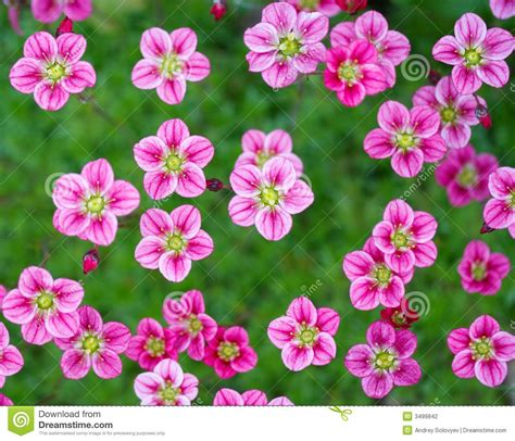 small pink flowers stock photography image 3499842