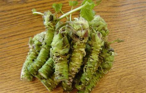 alimentazione per combattere il cancro il wasabi valido aiuto per combattere il cancro al pancreas