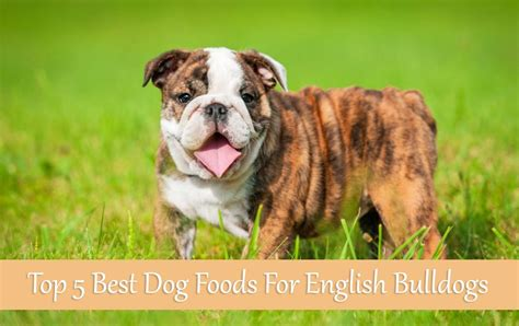 best food for bulldogs top 5 best foods for bulldogs buyer s guide 2017 mysweetpuppy net