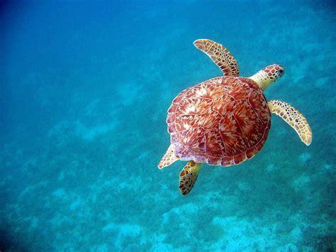 mirror amazing underwater photography