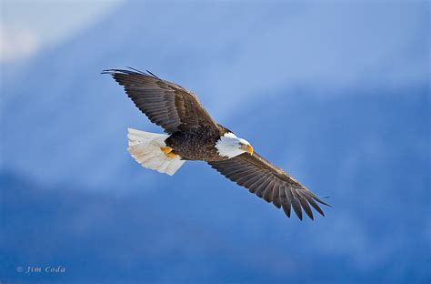 google images eagle quote sanctifyone all things new