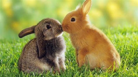 imagenes bonitas de animales que se mueven amor animal diario animales
