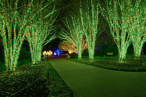 outdoor up lighting for trees outdoor led tree uplighting outdoor up lighting for trees