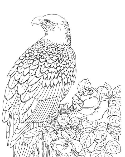 Free Coloring Pages Of Drawings Eagle Eagle Coloring Page