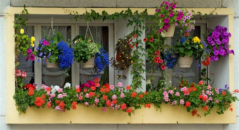 hanging window flower boxes file 2008 windowboxes arras 2622150984 jpg