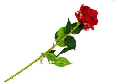 rosa rossa fiore rosa rossa grande c spine cm 78 fiore artificiale da