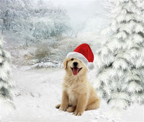 golden retriever puppies snow golden retriever puppies in snow
