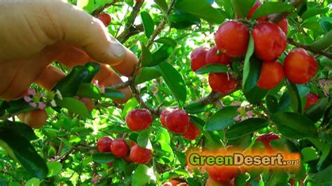 12 fruits of the tree of 5 fruit trees that will you for the whole year