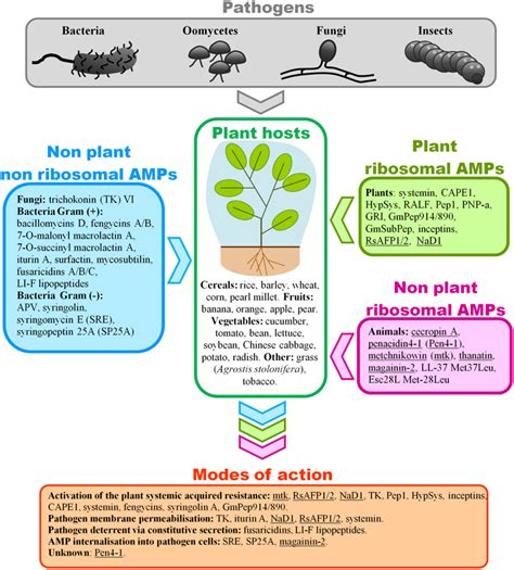 Journal Of Plant Disease - frontiers surveying the potential of secreted antimicrobial peptides to enhance plant disease