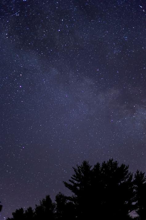 black tree  purple  black sky  night time