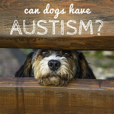 can dogs autism can dogs be autistic how autism works in canines