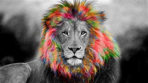 colorful lion wallpaper hd colorful lion wallpaper