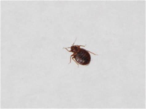 bed bugs utah bed bugs in utah extermiman pest wildlife control