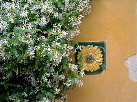 vine house plants plant care how to grow vines