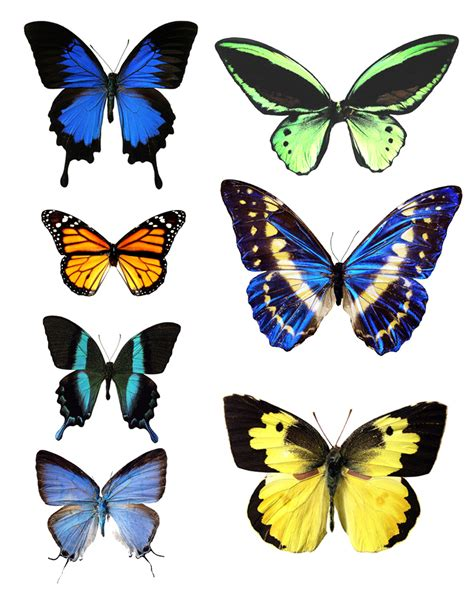 printable images of a butterfly butterfly template printable go to printable images of
