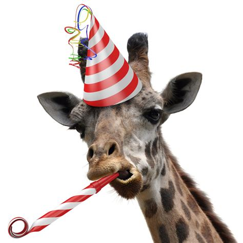 new year animal birthday celebrating our 1st anniversary at our new location