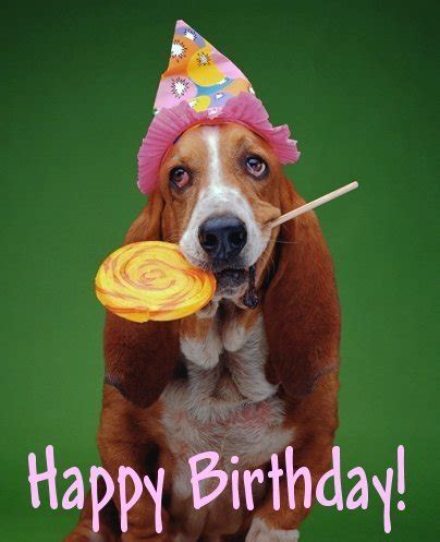 Birthday Dog Meme - happy birthday dog meme generator