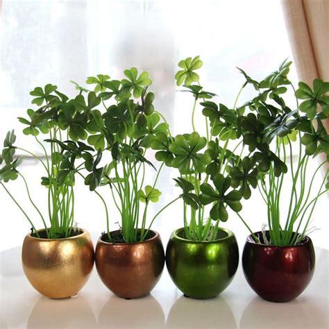 tutte le piante da appartamento piante verdi da appartamento piante da interno