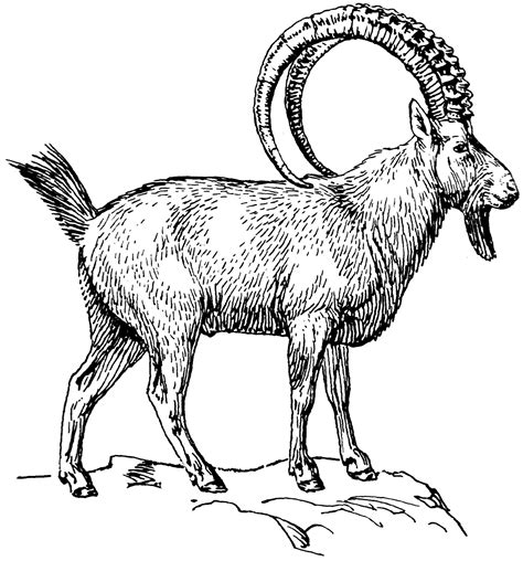 file ibex psf png wikimedia commons