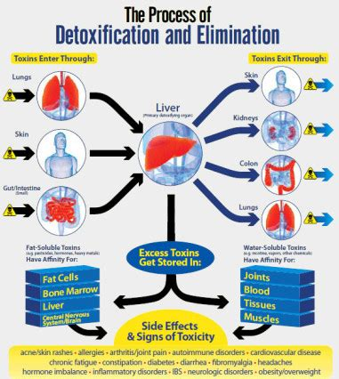 All Cell Detox Benefits by Every Day Is Detox Day Blackhealth Co Uk